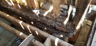 decking dry rot